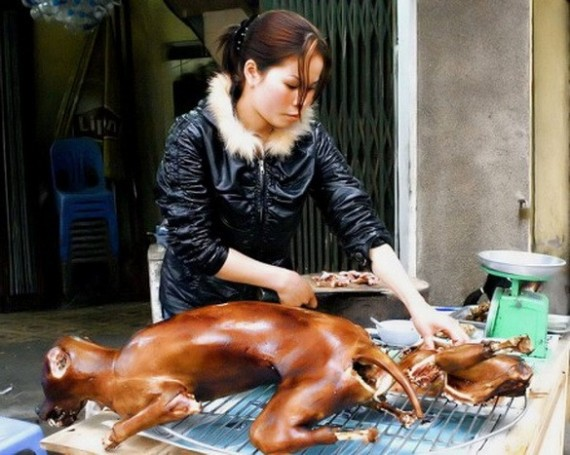 korea-dog-meat-570x455.jpg